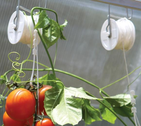 Tomatenrank-Kit passend zu jedem Rion Gewächshaus, 6 Stk.