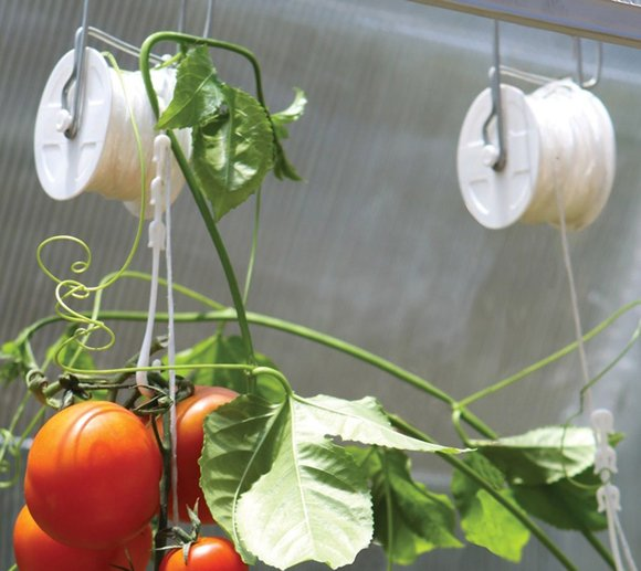Rion Tomatenrank-Kit passend zu jedem Rion Gewächshaus, 6 Stk.